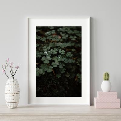 Plakat na ścianę Koniczyny Różany Ogród