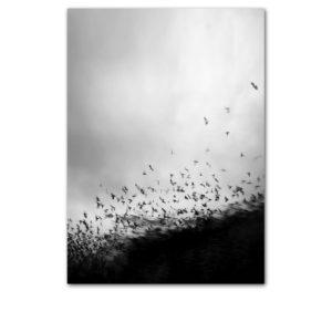 Plakat na ścianę magical birds
