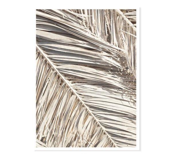 Plakat na ścianę Wam Beige Dry Palm Leafs