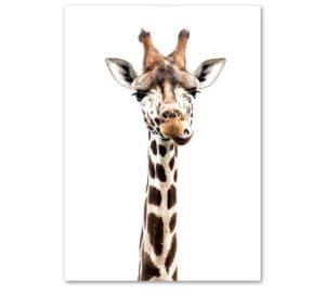 Plakat na ścianę Żująca Żyrafa