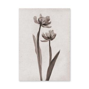 Plakat na ścianę kwiaty