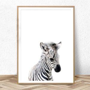 Plakat na ścianę Mała Zebra