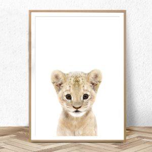 Plakat na ścianę małe Lwiątko