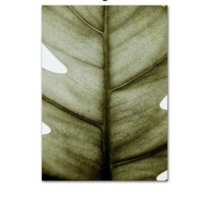 Plakat na ścianę Bananas Leaf