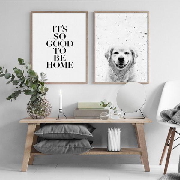 Plakat na ścianę Golden Retriever