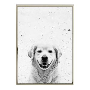 Plakat na ścianę Golden Retriever