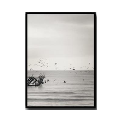 Plakat na ścianę Seagulls