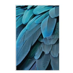 Plakat na ścianę Exotic Feather