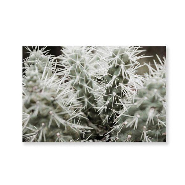 Plakat na ścianę Kaktusy