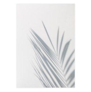 Plakat na ścianę Palm Shadow