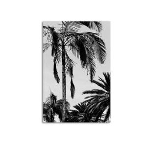 Plakat na ścianę Coconut Palms