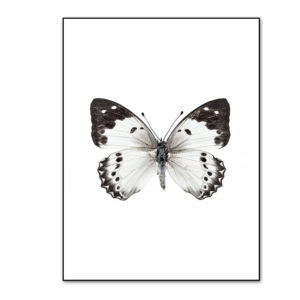 Plakat na ścianę Butterfly Wings
