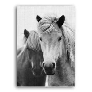 Plakat na ścianę Horses