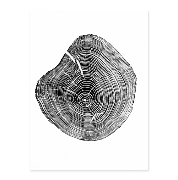 Plakat na ścianę Tree Annual Ring