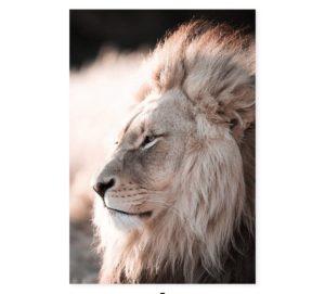 Plakat na ścianę Lion