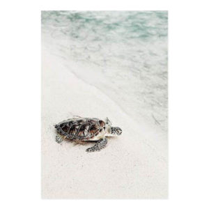 Plakat na ścianę Turtle