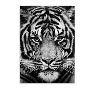 Plakat na ścianę Tiger