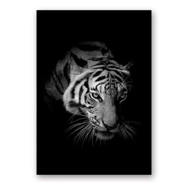 Plakat na ścianę Tiger 2