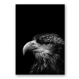 Plakat na ścianę Eagle