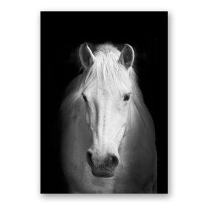 Plakat na ścianę White Horse