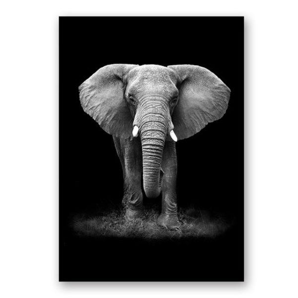 Plakat na ścianę Elephant