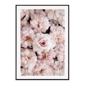 Plakat na ścianę peony flowers